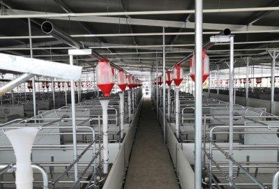 養豬場產品