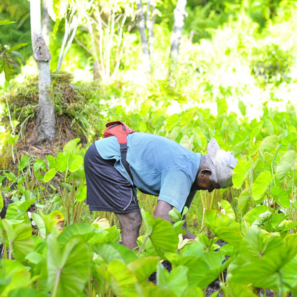 農業農村部發布最新9大作物施肥指導意見!