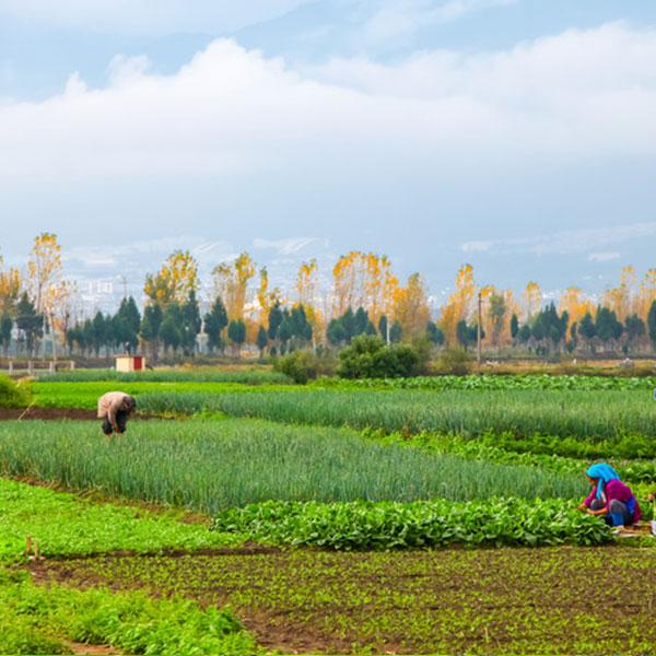農業部長韓長賦:農業轉型升級要抓住質量興農、綠色發展、調優結構等關鍵詞
