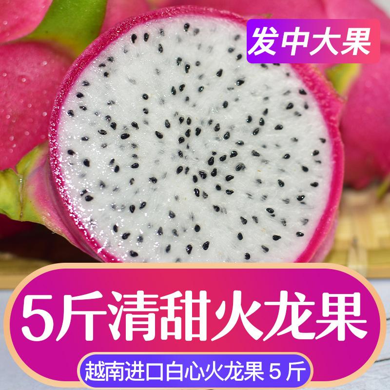 白心火龙果五斤装单果250g-500g