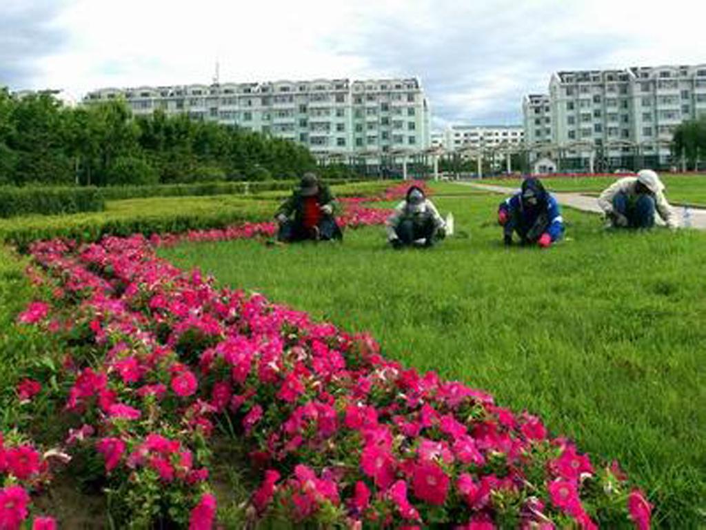 園林綠化養護
