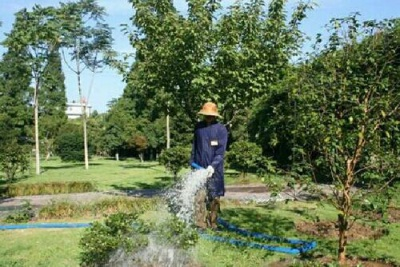 東莞私家別墅園林綠化養護