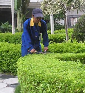 東莞幼兒園園林綠化養護