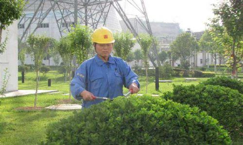 東莞廣場綠化養護