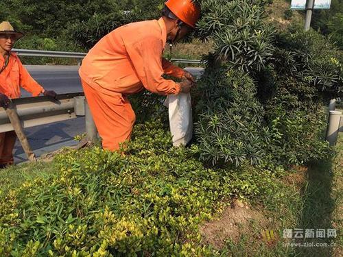 東莞道路綠化養護