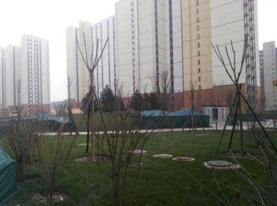 花園綠化養護