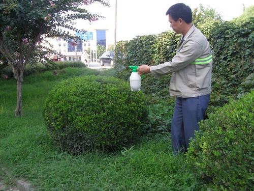 東莞綠化養護案例-澆水施肥殺蟲