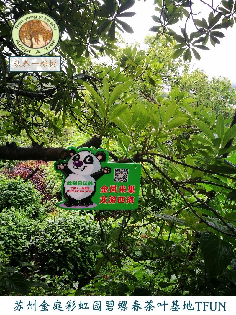 认养一棵树2-A套餐包吃包住包旅游四季鲜果畅快吃