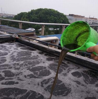筛选印染菌对印染废水的处理效果