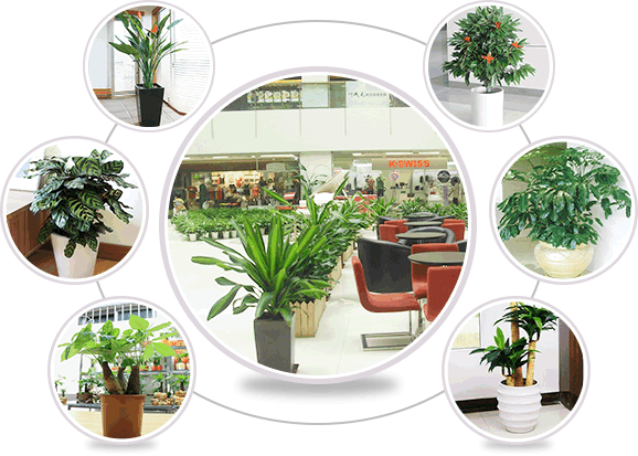 上海办公室植物租赁
