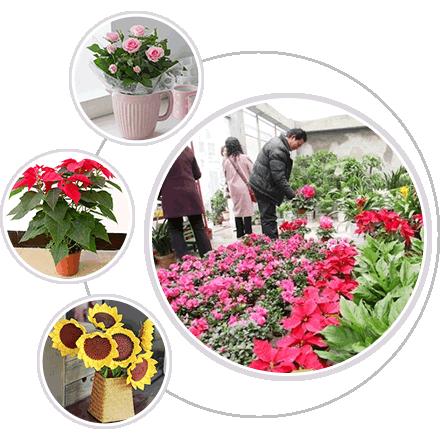 上海植物租赁公司