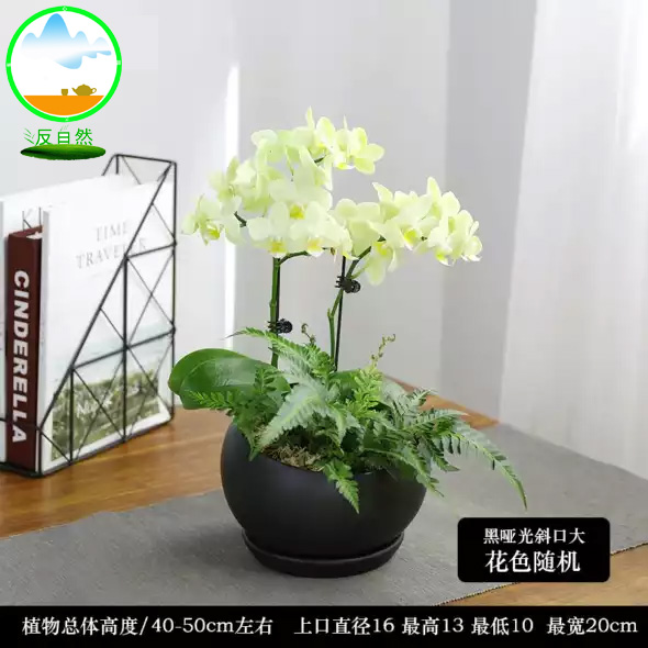 綠植租擺中常見花卉,***養的的有哪些花