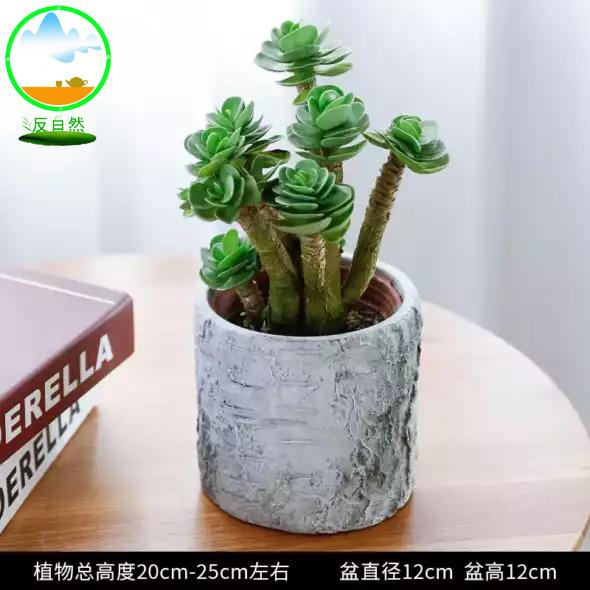 植物租賃之金錢木