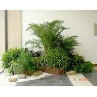 植物擺放設計