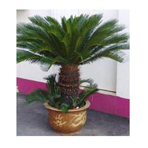 容易成活的植物