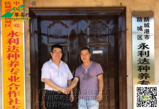 广州草粤行与永利达联合打造牛大力茶扶贫项目