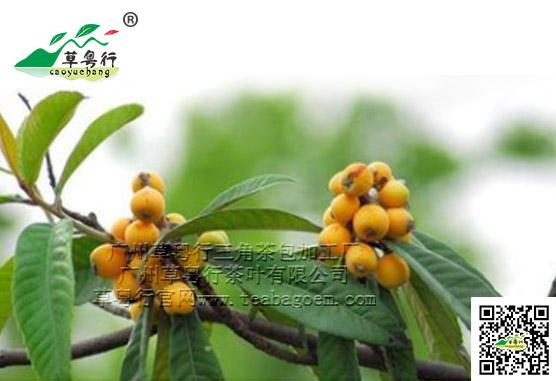 新资源食品之枇杷叶代用茶