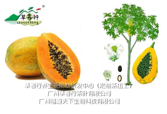 药食同源之木瓜代用茶加工