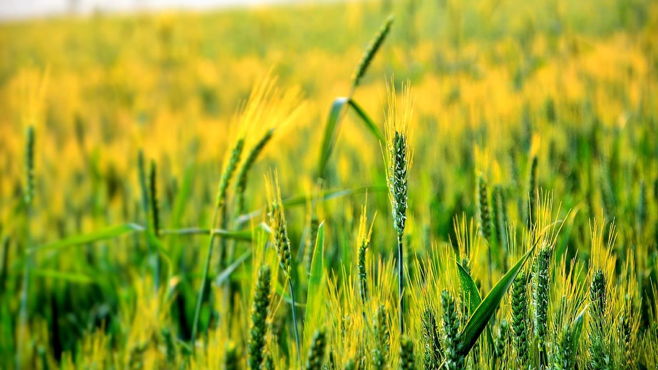 农作物精准施肥系统