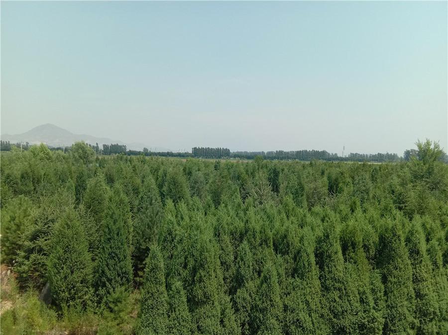 【第一次拍卖】刘文秀一切的位于伟易博手机客户端忻府区前秦村的苗木
