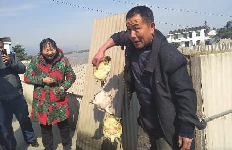 新春走基层 | 稻田养鱼鳖,鼓了口袋,美...