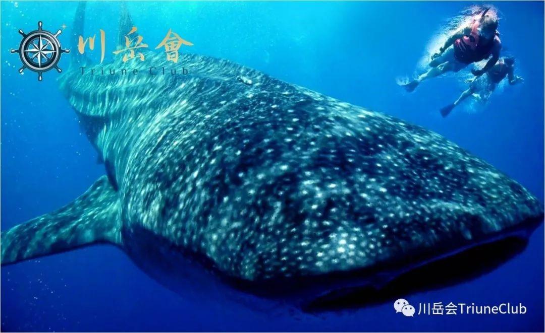 与鲸鲨同游 – 墨西哥&哥斯达黎加奇幻奢华探秘