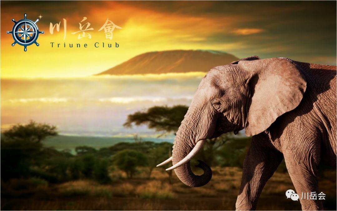 远征非洲之巅- 攀乞力马扎罗山,观角马大军渡河