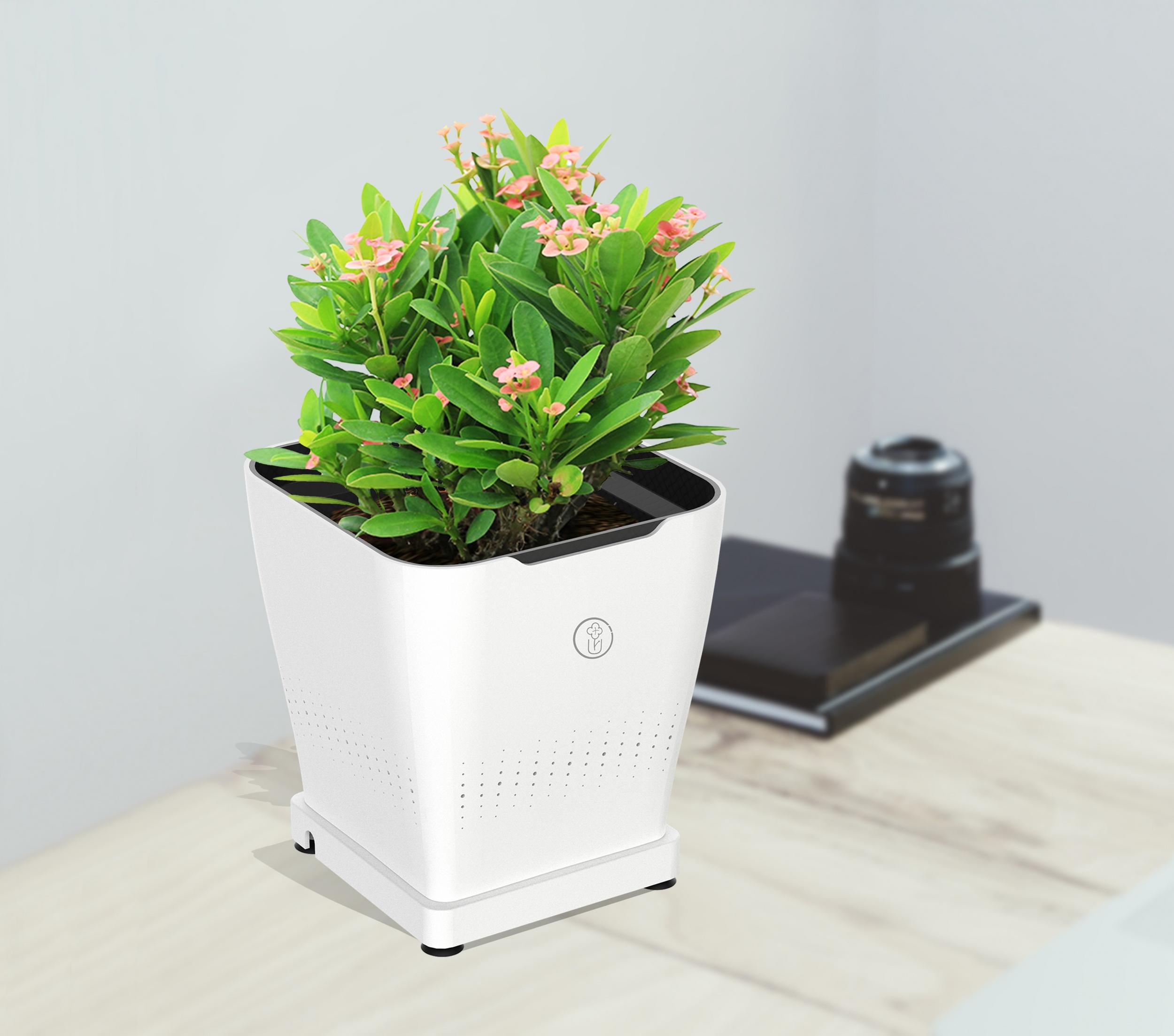 植物换盆技巧