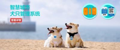 智慧城市养犬管信息系统