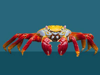 粉碎螃蟹飼料