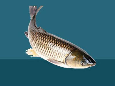 粉碎淡水魚飼料