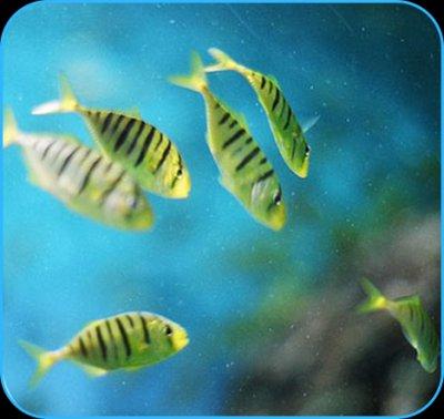 渔业水质检测