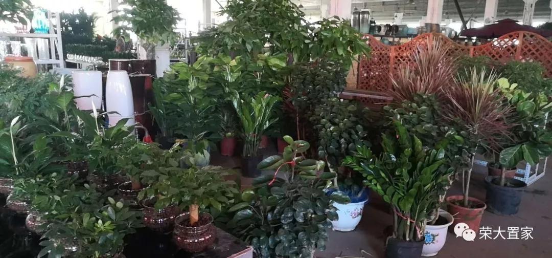 植物租摆需要遵循哪些原则