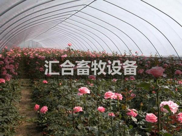 花卉连栋温室案例