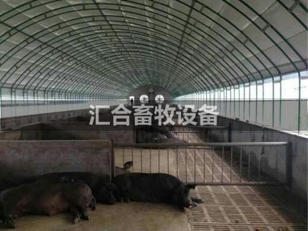 养殖黑猪棚