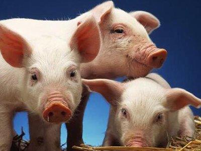 猪场药物保健计划