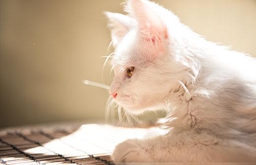如何给猫咪挑选好的抓板