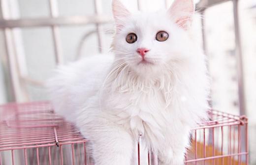 教你怎么训练猫大小便