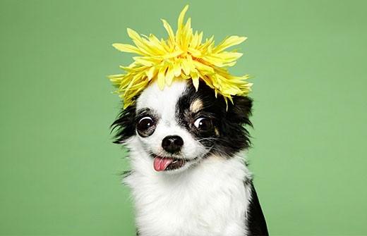 如何选只聪明易训的狗 详解狗狗选取技巧