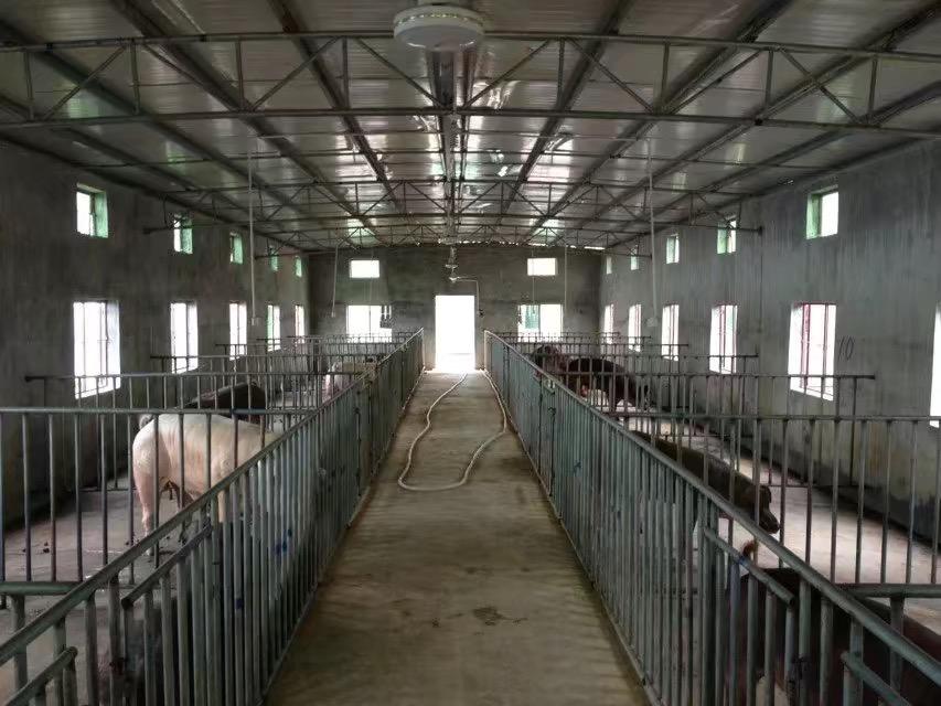 猪场降温设备——负压式风机湿帘组合降温系统工作原理
