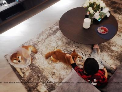 现代客厅秋田犬和小主人温馨生活-现代效果图