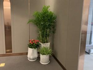 上海植物租擺方案