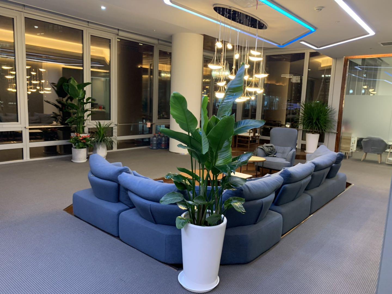 酒店植物租賃方案