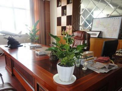 辦公室植物租擺案例