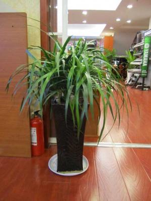 公司植物租賃案例