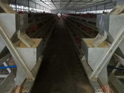 雞用養殖設備1