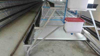 階梯式輸送帶自動喂料系統1