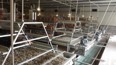 階梯式全自動養殖系統