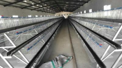 階梯式輸送帶自動喂料系統7