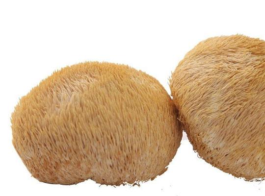 猴头菇养胃茶